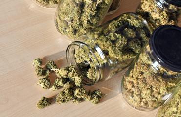 cannabis digital marketing